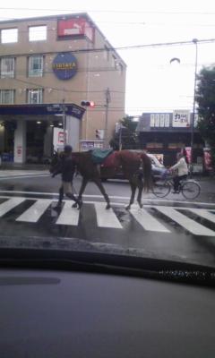 お馬さんが行く!